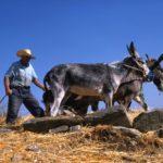 L'agriculture de Paros