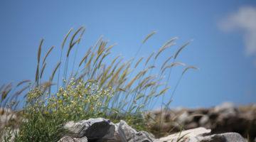 Το Περιβαλλοντικό Παρατηρητήριο Πάρου