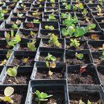 Νέες επιχειρηματικές ελπίδες στη Πάρο