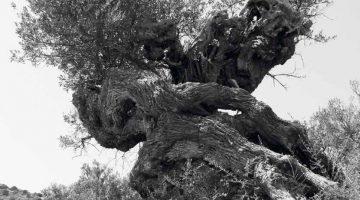 Δράσεις γιά την ανάδειξη των αρχαίων μνημείων της Πάρου